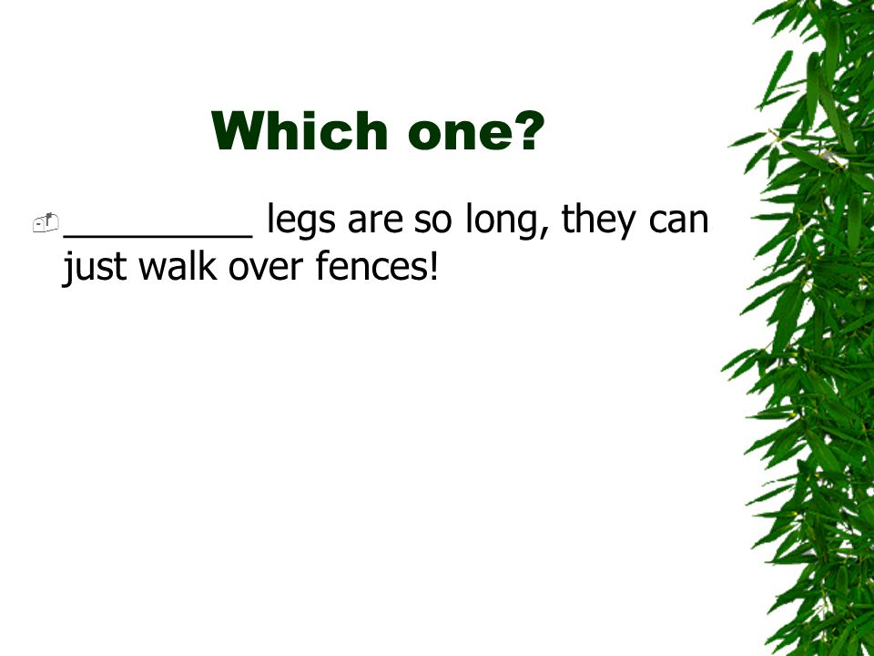 Which one  _________ legs are so long, they can just walk over fences!