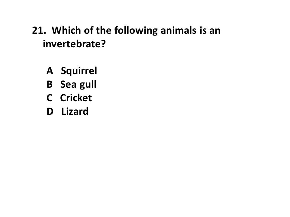 21. Which of the following animals is an invertebrate? A Squirrel B Sea gull C Cricket D Lizard