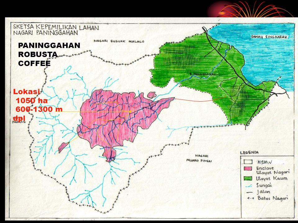 Lokasi 1050 ha 600-1300 m dpl PANINGGAHAN ROBUSTA COFFEE