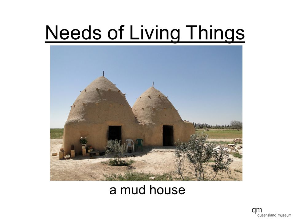 Needs of Living Things a mud house