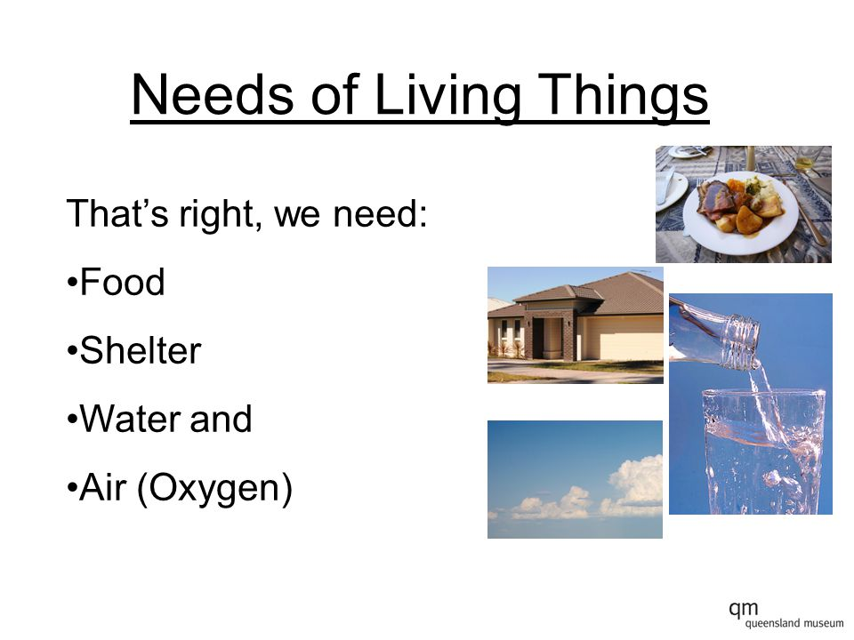 Needs of Living Things That's right, we need: Food Shelter Water and Air (Oxygen)