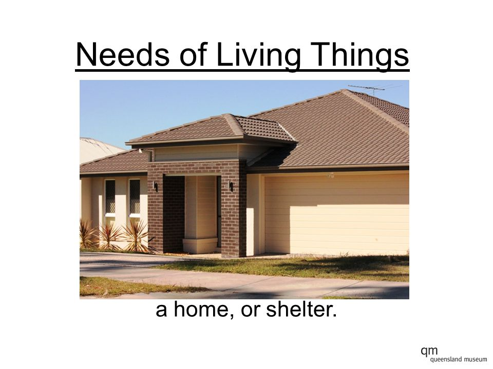 Needs of Living Things a home, or shelter.
