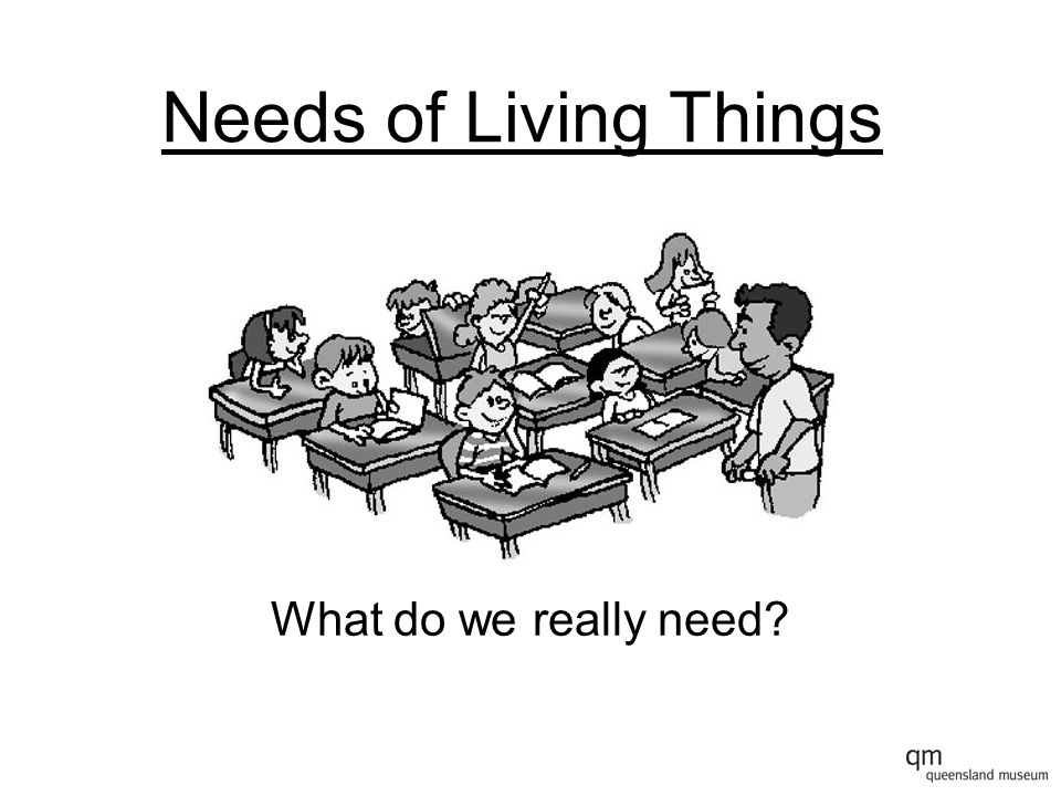 Needs of Living Things Can you remember the things that we really need to survive?