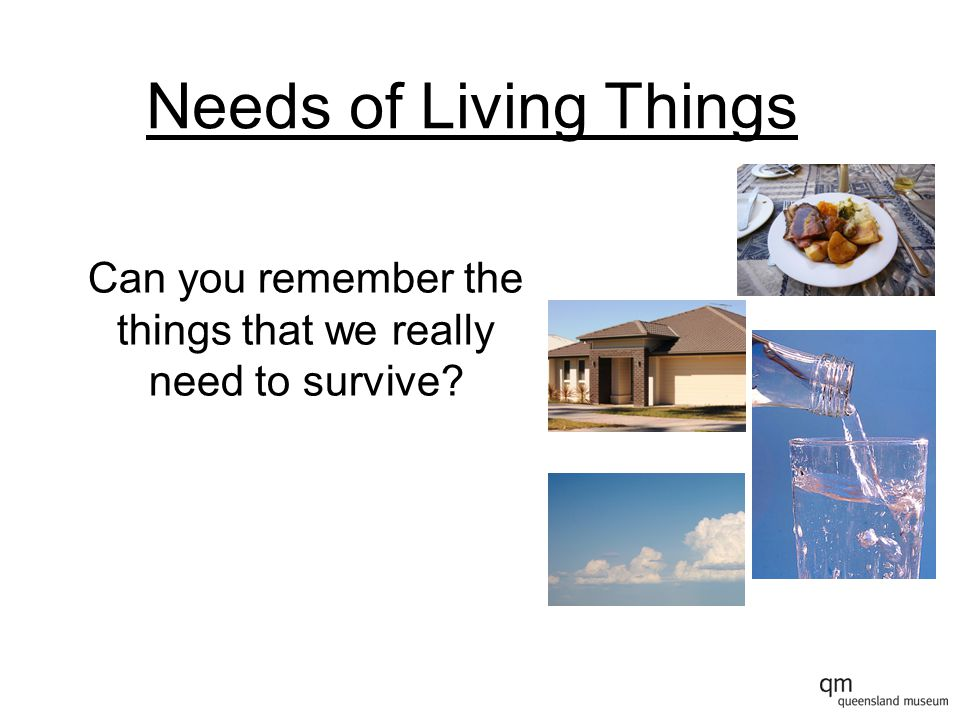 Needs of Living Things Can you remember the things that we really need to survive