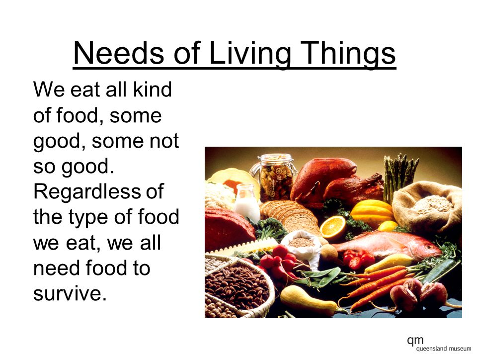 Needs of Living Things Other animals also need food to survive, but their food is different to ours.