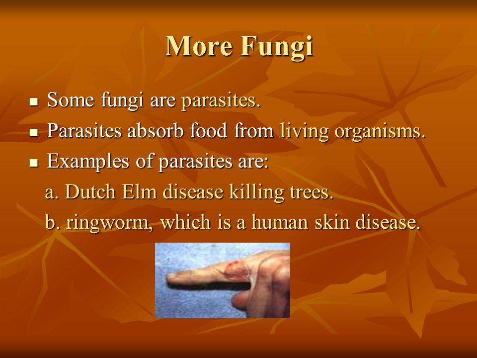 More Fungi Some fungi are parasites. Some fungi are parasites. Parasites absorb food from living organisms. Parasites absorb food from living organism
