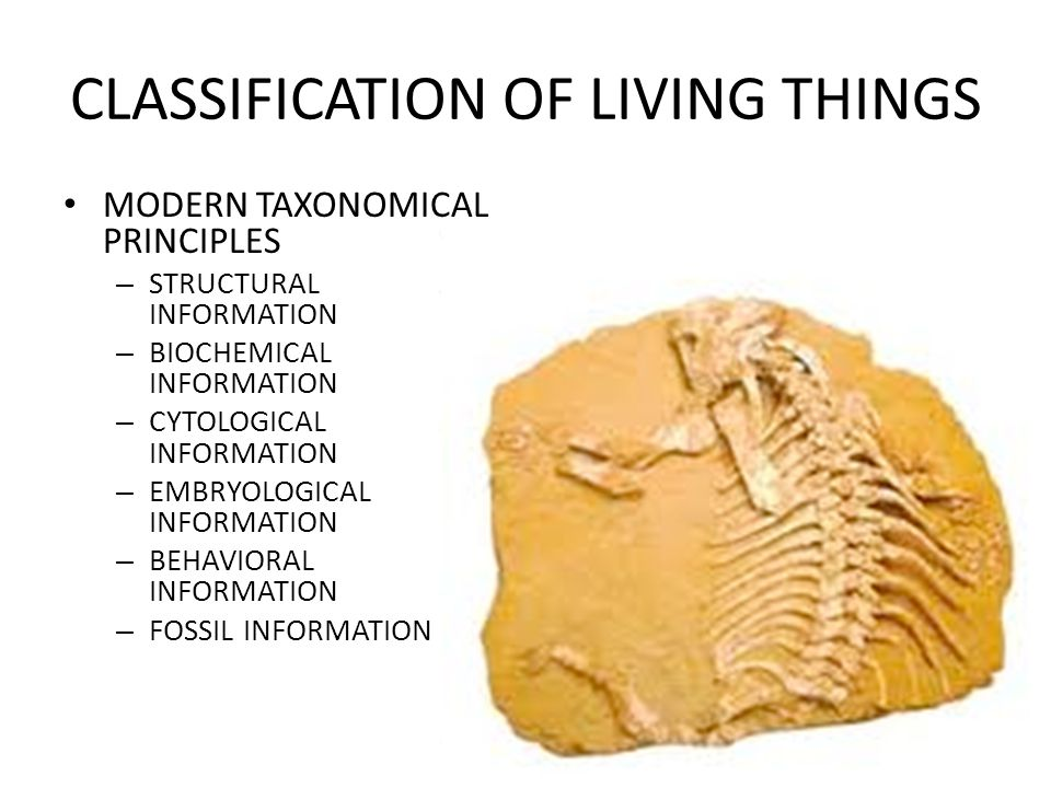 CLASSIFICATION OF LIVING THINGS MODERN TAXONOMICAL PRINCIPLES – STRUCTURAL INFORMATION – BIOCHEMICAL INFORMATION – CYTOLOGICAL INFORMATION – EMBRYOLOG