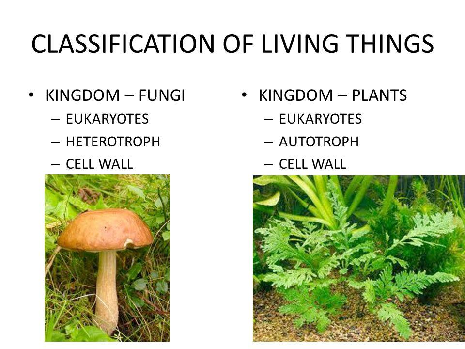 CLASSIFICATION OF LIVING THINGS KINGDOM – FUNGI – EUKARYOTES – HETEROTROPH – CELL WALL KINGDOM – PLANTS – EUKARYOTES – AUTOTROPH – CELL WALL
