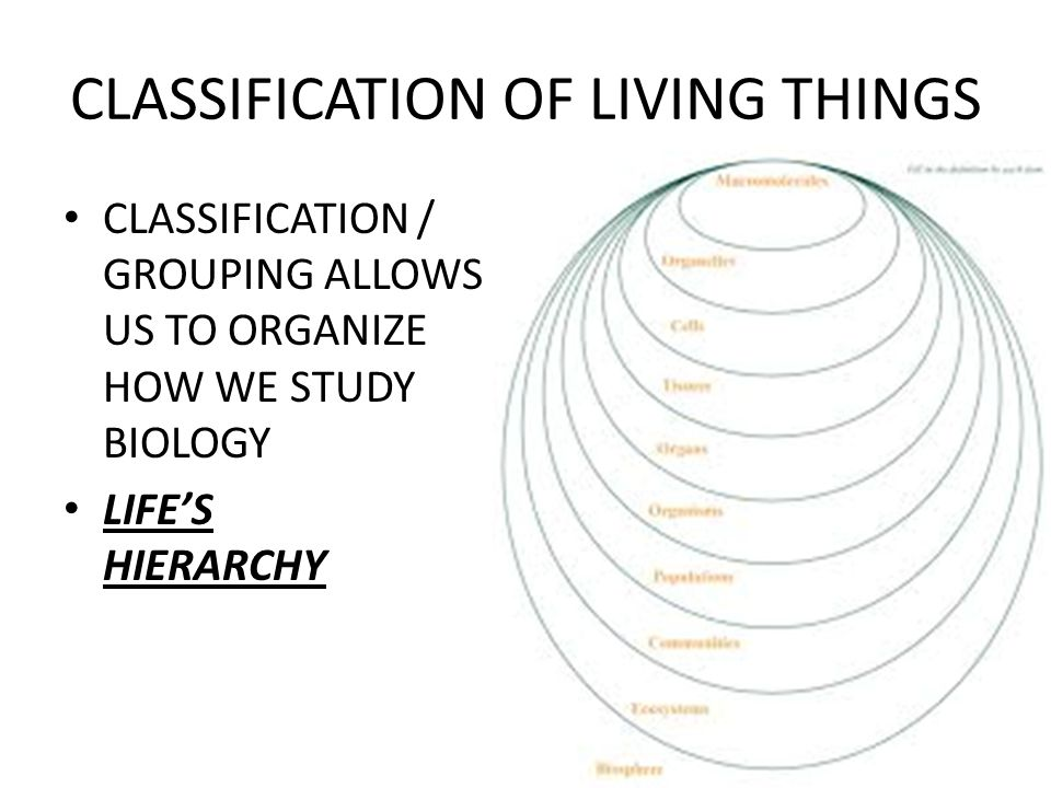 CLASSIFICATION OF LIVING THINGS CLASSIFICATION / GROUPING ALLOWS US TO ORGANIZE HOW WE STUDY BIOLOGY LIFE'S HIERARCHY