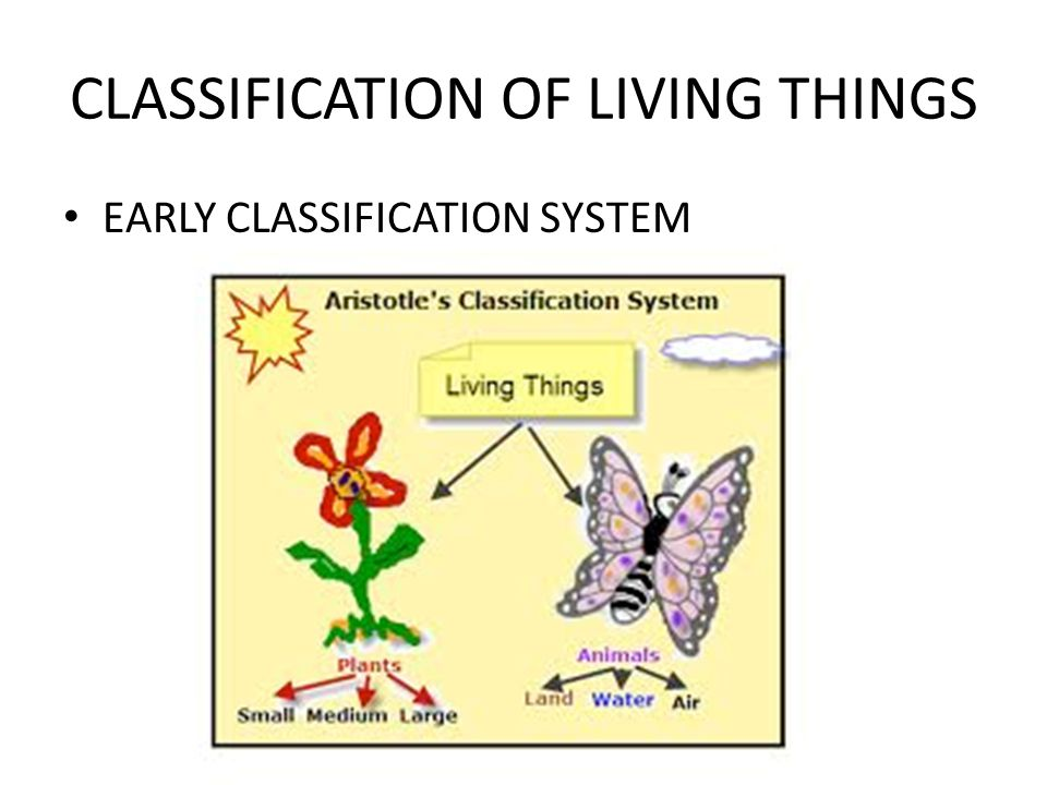 CLASSIFICATION OF LIVING THINGS EARLY CLASSIFICATION SYSTEM