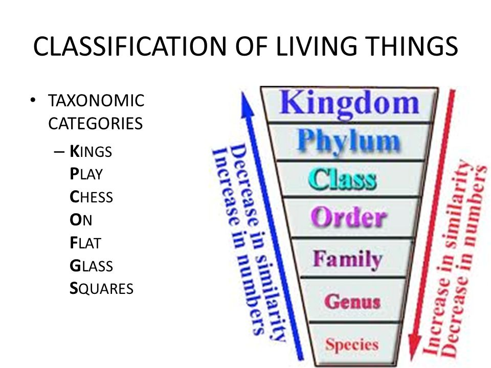 CLASSIFICATION OF LIVING THINGS TAXONOMIC CATEGORIES – K INGS P LAY C HESS O N F LAT G LASS S QUARES