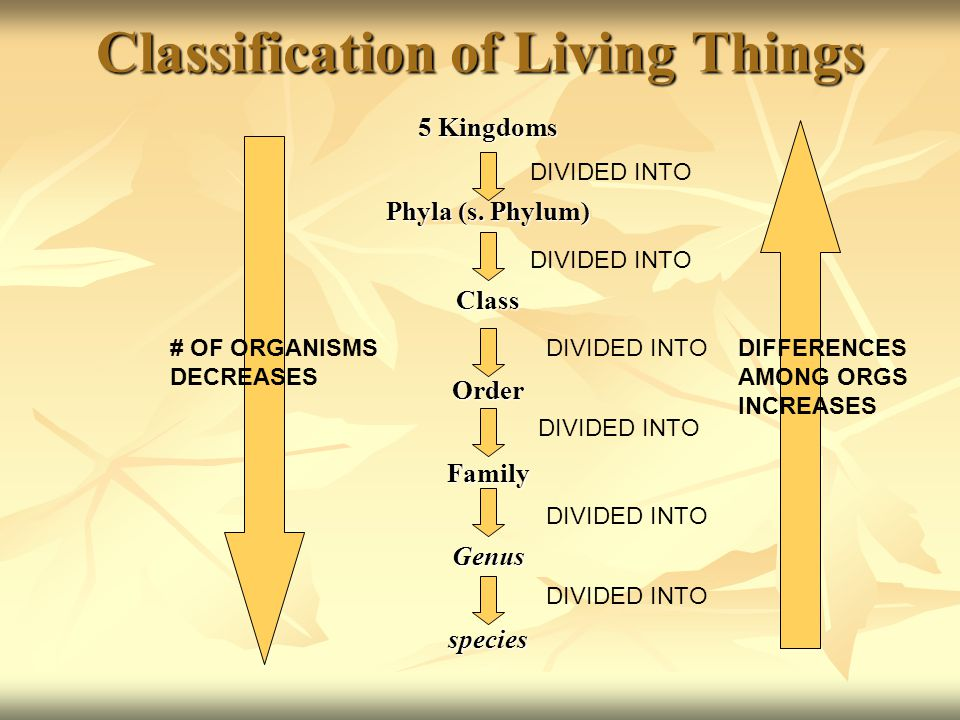 Classification of Living Things Why classify organisms? Why classify organisms? For easy identification For easy identification For evolutionary compa