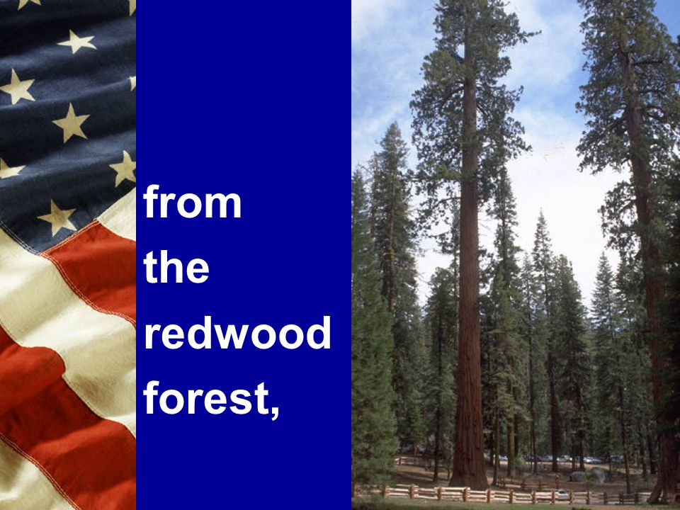 from the redwood forest,
