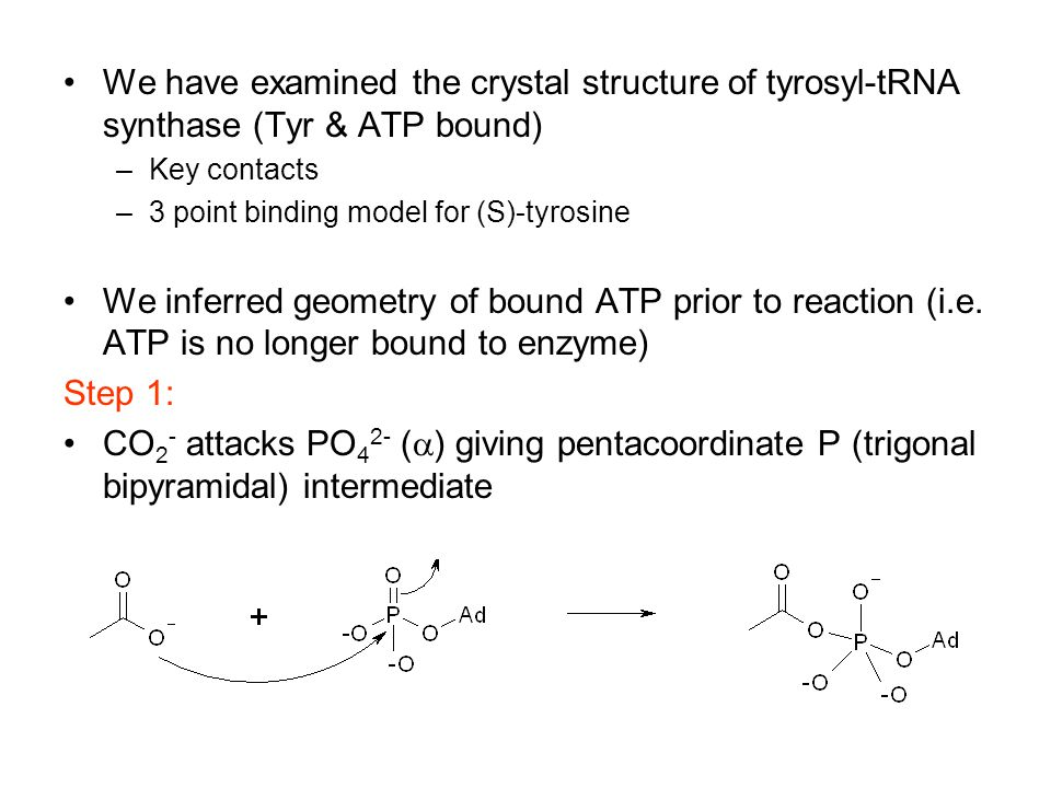 We have examined the crystal structure of tyrosyl-tRNA synthase (Tyr & ATP bound) –Key contacts –3 point binding model for (S)-tyrosine We inferred geometry of bound ATP prior to reaction (i.e.