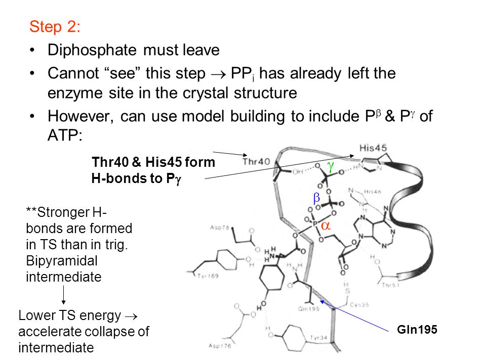 "Step 2: Diphosphate must leave Cannot ""see"" this step  PP i has already left the enzyme site in the crystal structure However, can use model building"