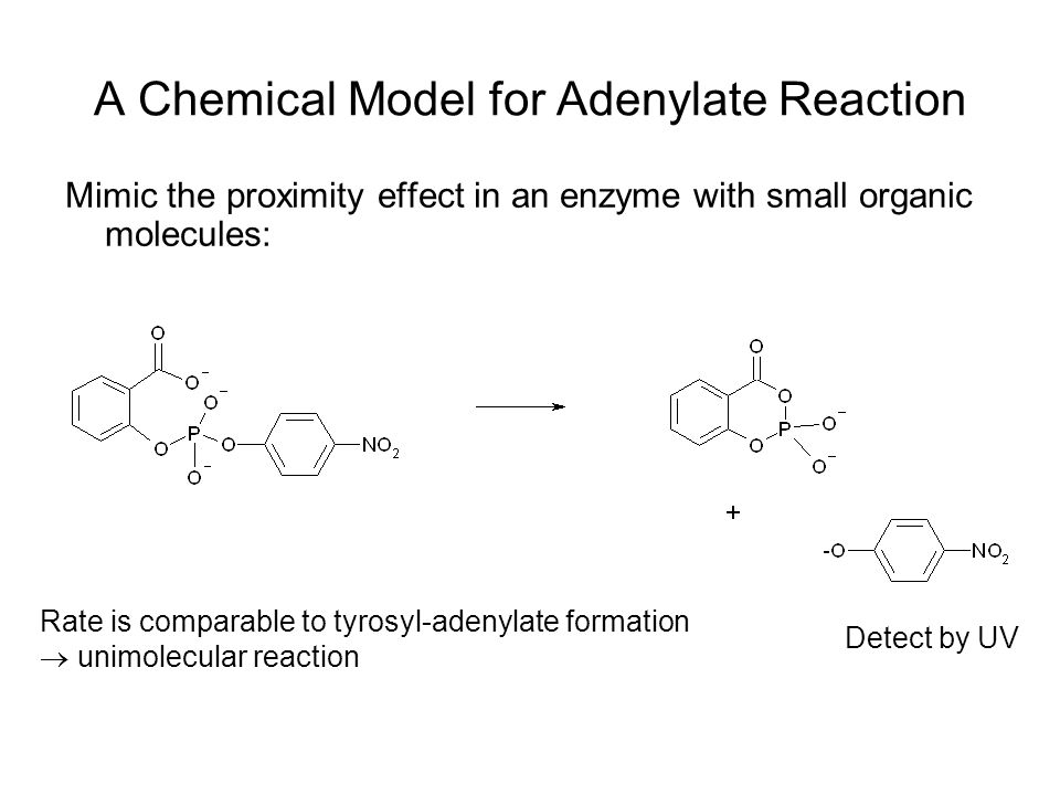 A Chemical Model for Adenylate Reaction Mimic the proximity effect in an enzyme with small organic molecules: Detect by UV Rate is comparable to tyrosyl-adenylate formation  unimolecular reaction