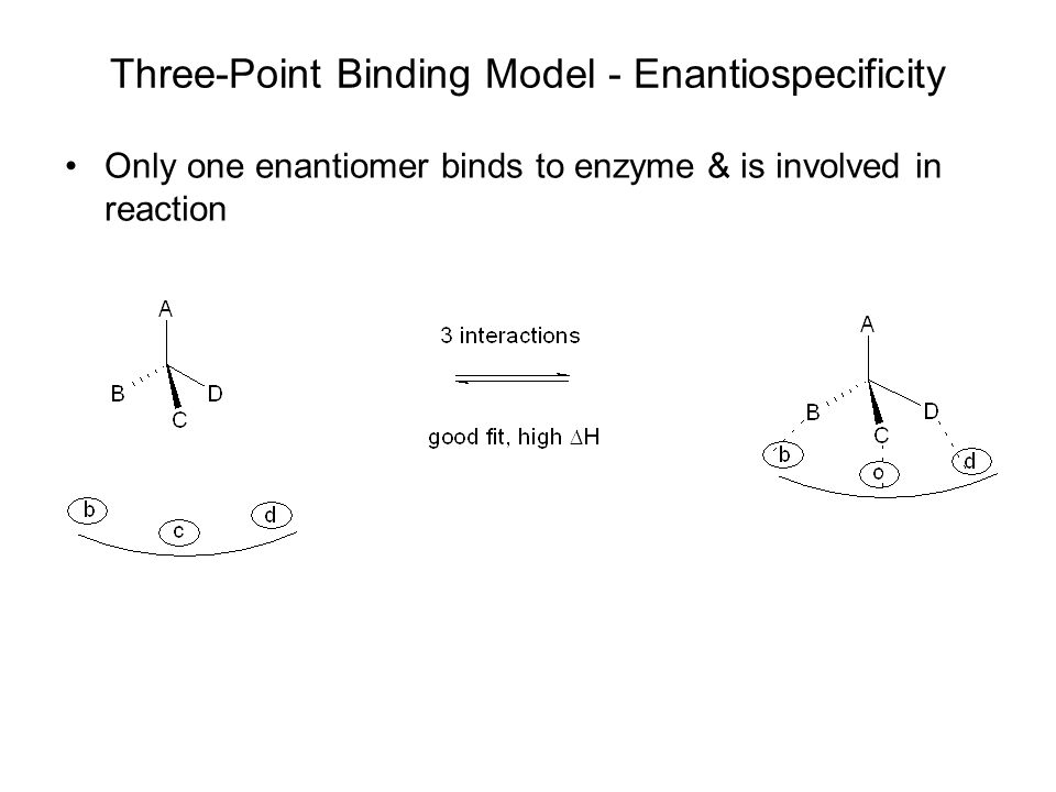Three-Point Binding Model - Enantiospecificity Only one enantiomer binds to enzyme & is involved in reaction