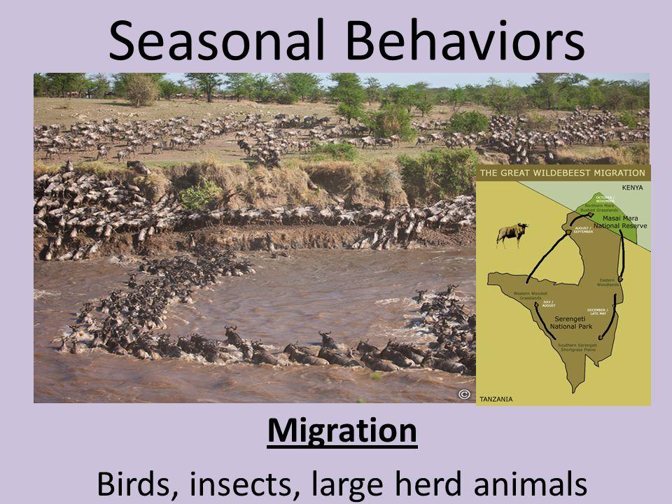 Seasonal Behaviors Migration Birds, insects, large herd animals