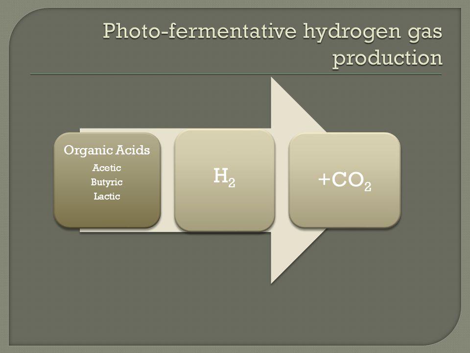 Organic Acids Acetic Butyric Lactic H2 +CO2