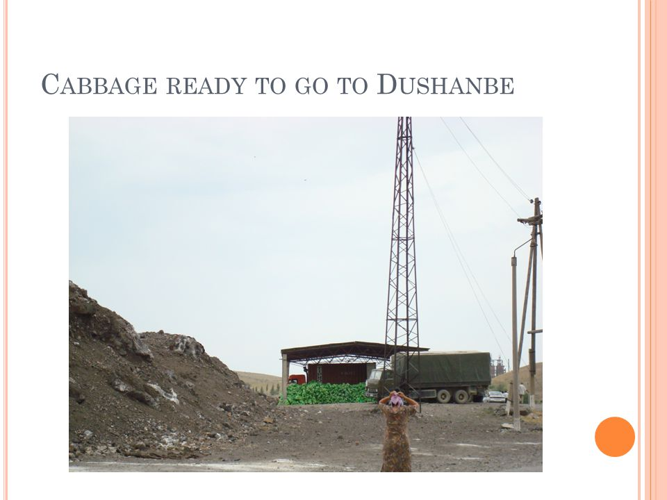 C ABBAGE READY TO GO TO D USHANBE