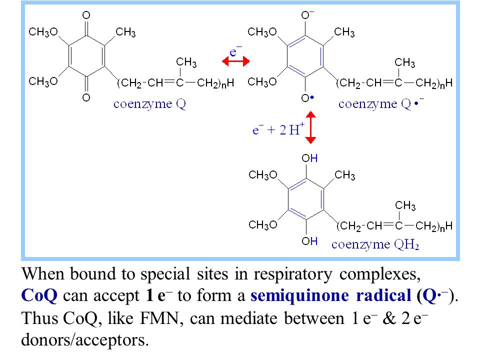 When bound to special sites in respiratory complexes, CoQ can accept 1 e   to form a semiquinone radical (Q·  ). Thus CoQ, like FMN, can mediate be