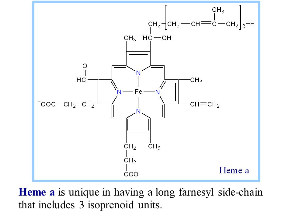 Heme a is unique in having a long farnesyl side-chain that includes 3 isoprenoid units.