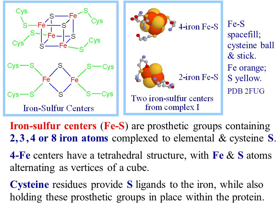 Iron-sulfur centers (Fe-S) are prosthetic groups containing 2, 3, 4 or 8 iron atoms complexed to elemental & cysteine S.