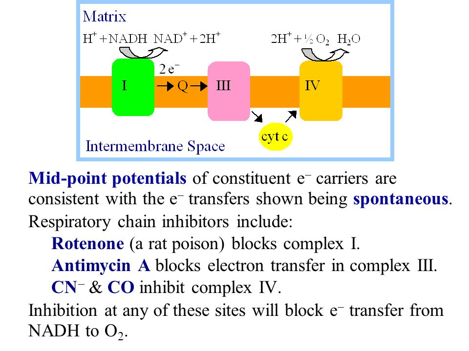 Mid-point potentials of constituent e  carriers are consistent with the e  transfers shown being spontaneous. Respiratory chain inhibitors include:
