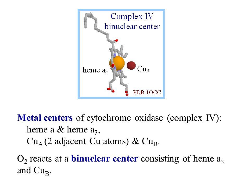 Metal centers of cytochrome oxidase (complex IV): heme a & heme a 3, Cu A (2 adjacent Cu atoms) & Cu B.
