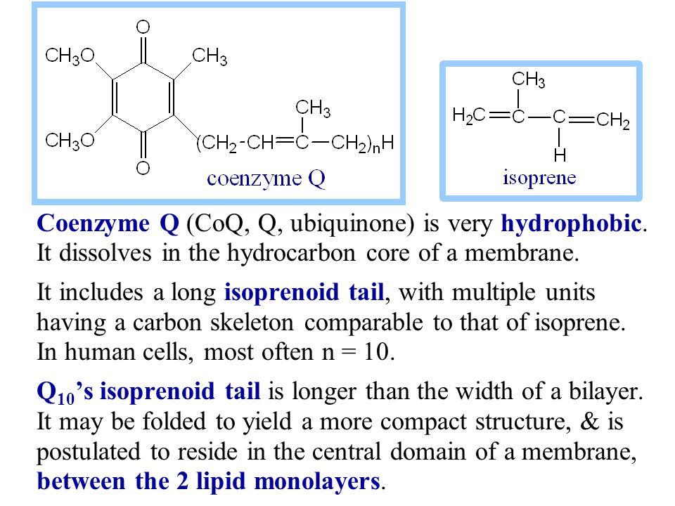 Coenzyme Q (CoQ, Q, ubiquinone) is very hydrophobic.