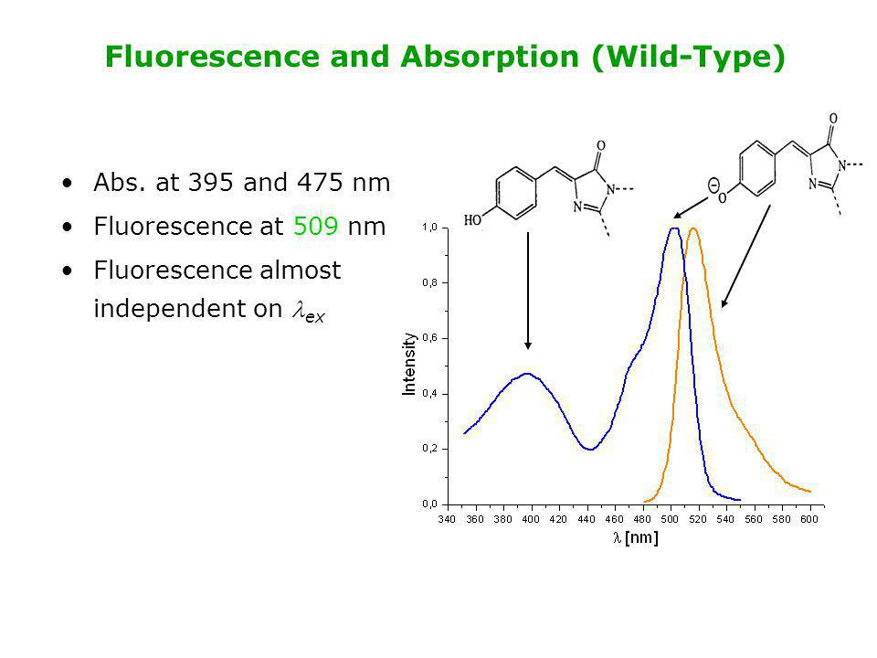 Fluorescence and Absorption (Wild-Type) Abs. at 395 and 475 nm Fluorescence at 509 nm Fluorescence almost independent on ex