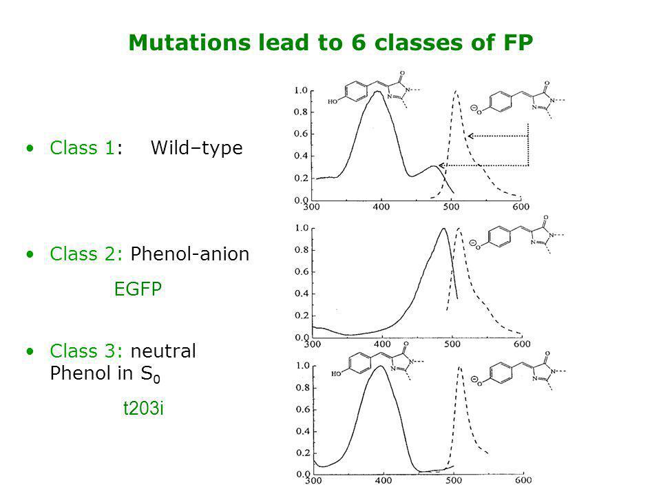 Class 1: Wild–type Class 2: Phenol-anion Class 3: neutral Phenol in S 0 Mutations lead to 6 classes of FP EGFP t203i