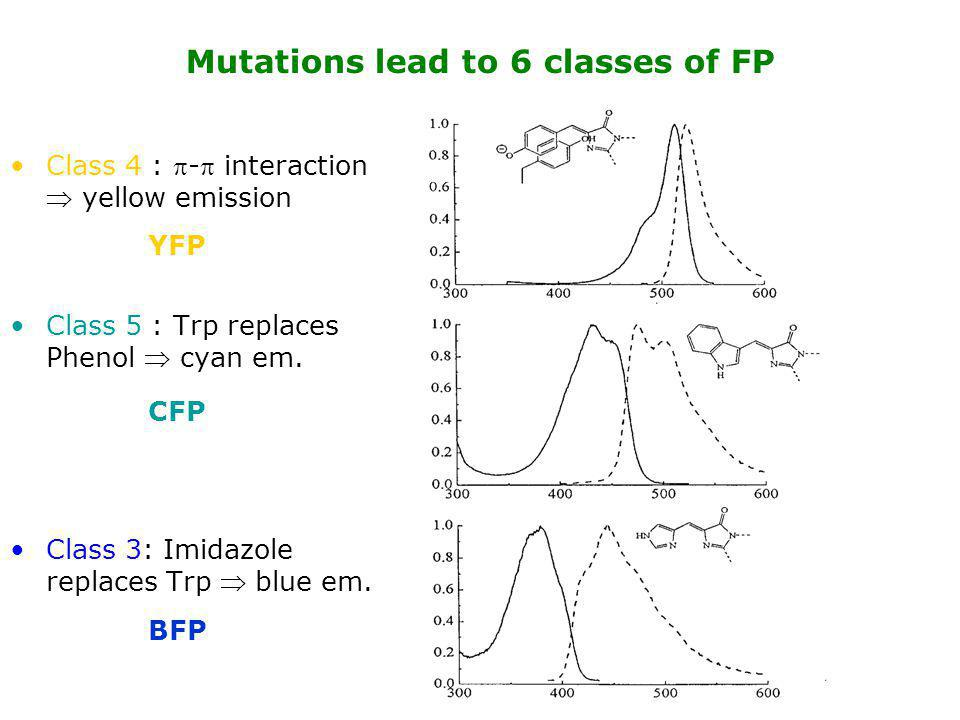 Class 4 : - interaction  yellow emission Class 5 : Trp replaces Phenol  cyan em. Class 3: Imidazole replaces Trp  blue em. Mutations lead to 6 cl