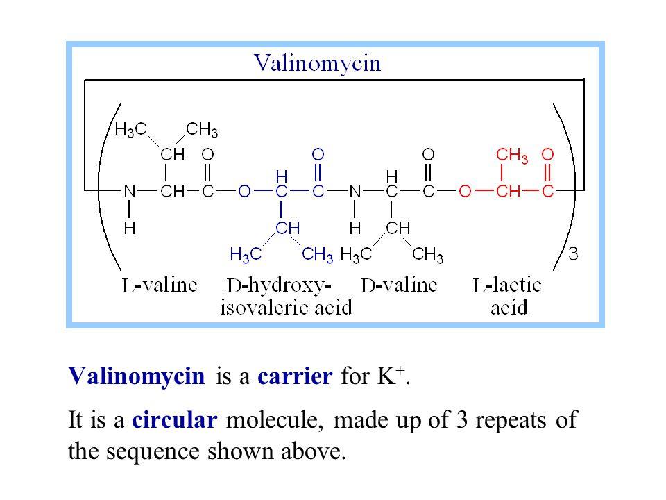 3.Ca ++ dissociates into the ER lumen. 4.