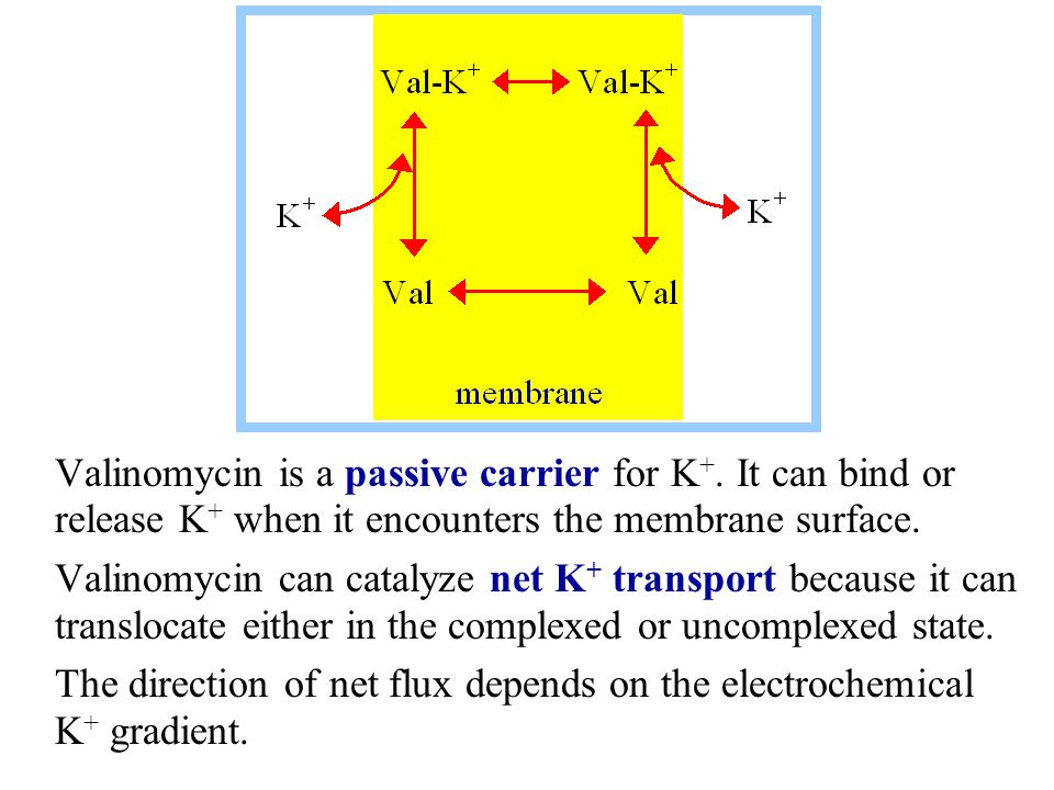 Valinomycin is a passive carrier for K +. It can bind or release K + when it encounters the membrane surface. Valinomycin can catalyze net K + transpo