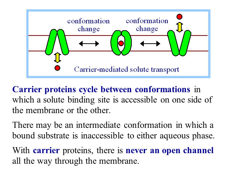 Channels cycle between open & closed conformations.