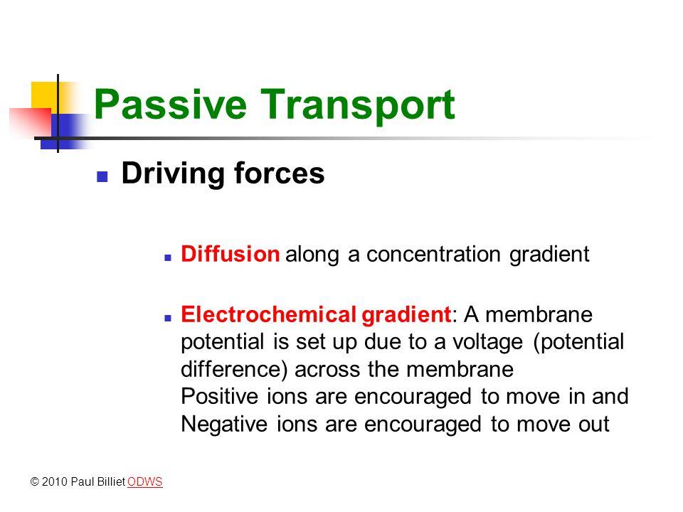 Electrochemical gradient ECF +ve Cytoplasm -ve Plasma membrane K+K+ Cl - Positive ions are encouraged to move in and negative ins are encouraged to move out © 2010 Paul Billiet ODWSODWS