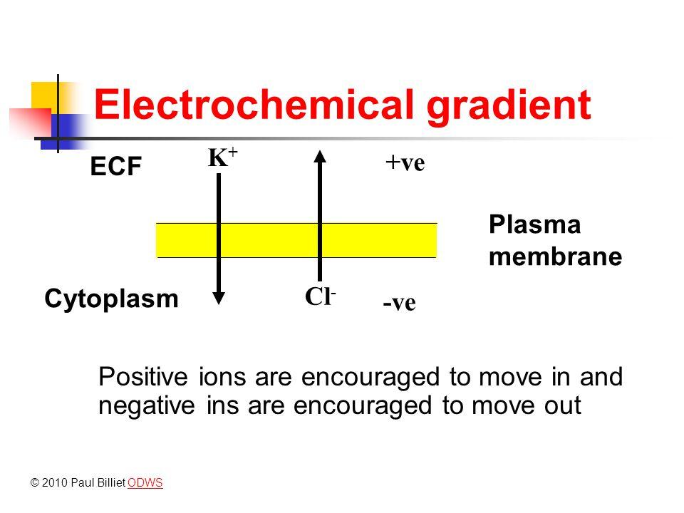 Diffusion and facilitated diffusion Diffusion may occur through any part of the plasma membrane, e.g.
