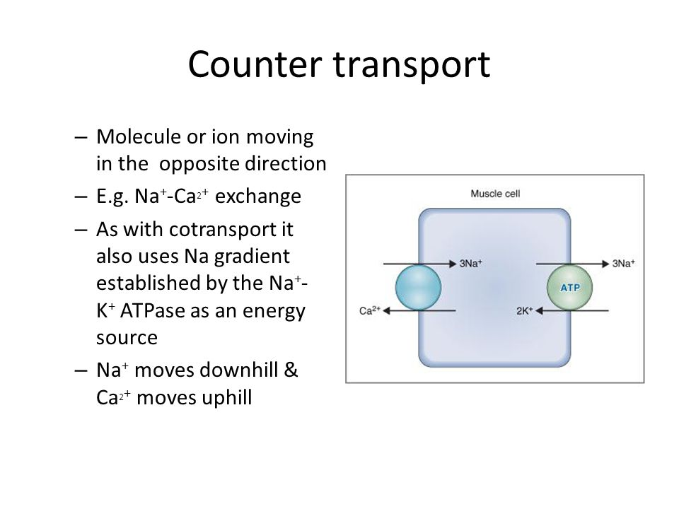 Counter transport – Molecule or ion moving in the opposite direction – E.g. Na + -Ca 2 + exchange – As with cotransport it also uses Na gradient estab