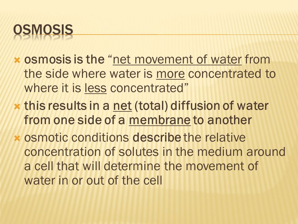 " osmosis is the ""net movement of water from the side where water is more concentrated to where it is less concentrated""  this results in a net (tota"