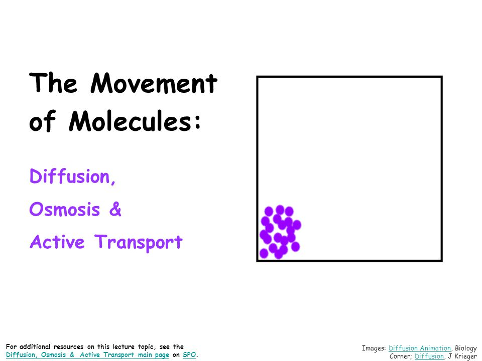 The Movement of Molecules: Diffusion, Osmosis & Active Transport Images: Diffusion Animation, Biology Corner; Diffusion, J KriegerDiffusion AnimationD
