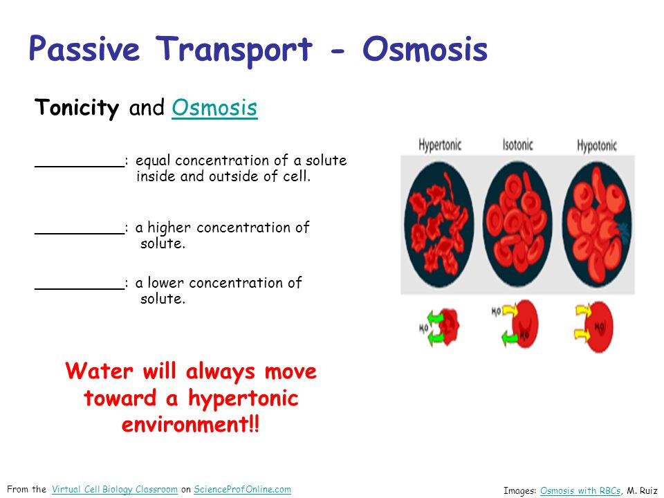 Tonicity and OsmosisOsmosis __________: equal concentration of a solute inside and outside of cell. __________: a higher concentration of solute. ____