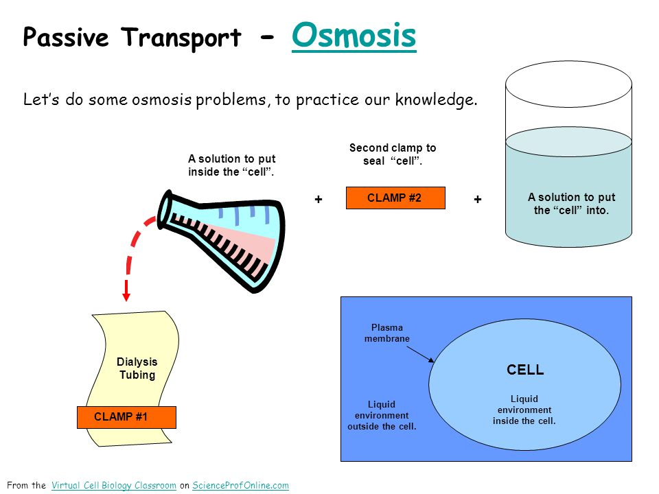 Let's do some osmosis problems, to practice our knowledge. CELL Plasma membrane Liquid environment outside the cell. Liquid environment inside the cel