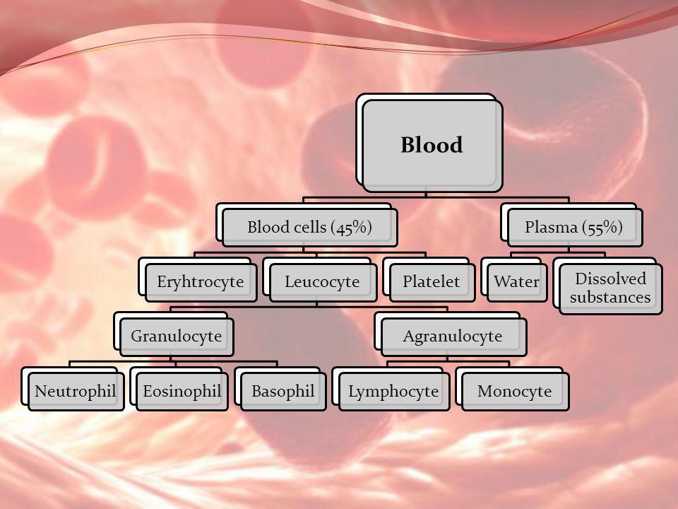 Blood Blood cells (45%)EryhtrocyteLeucocyteGranulocyteNeutrophilEosinophilBasophilAgranulocyteLymphocyteMonocytePlateletPlasma (55%)Water Dissolved su