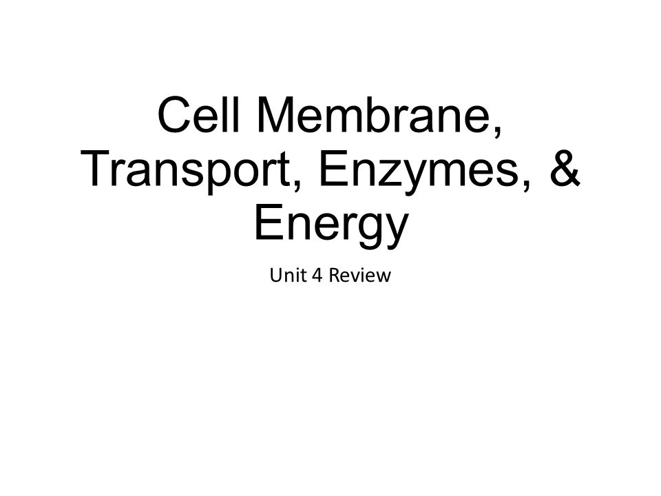 The Cell Membrane helps maintain Homeostasis by regulating transport of materials in/out of the cell.