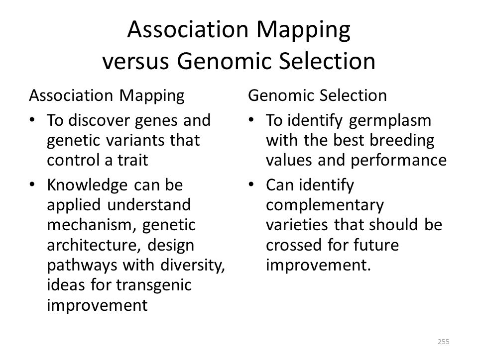 Association Mapping versus Genomic Selection Association Mapping To discover genes and genetic variants that control a trait Knowledge can be applied