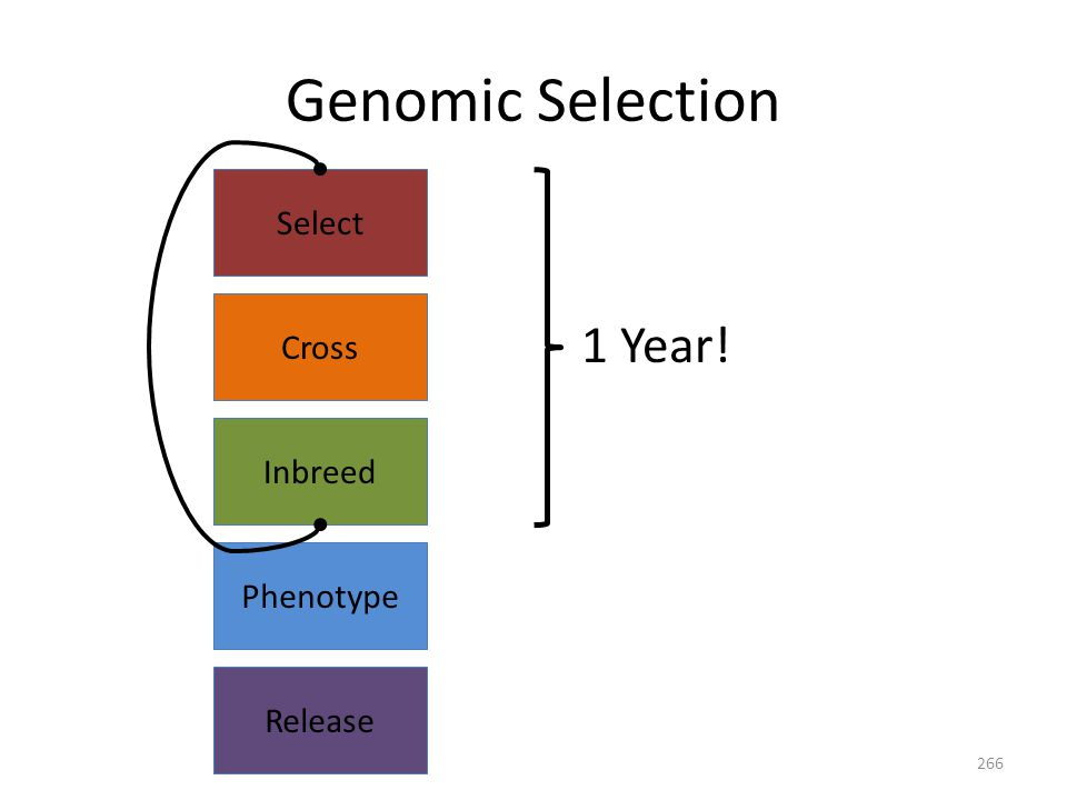 Release Select Cross Inbreed Phenotype 1 Year! Genomic Selection 266