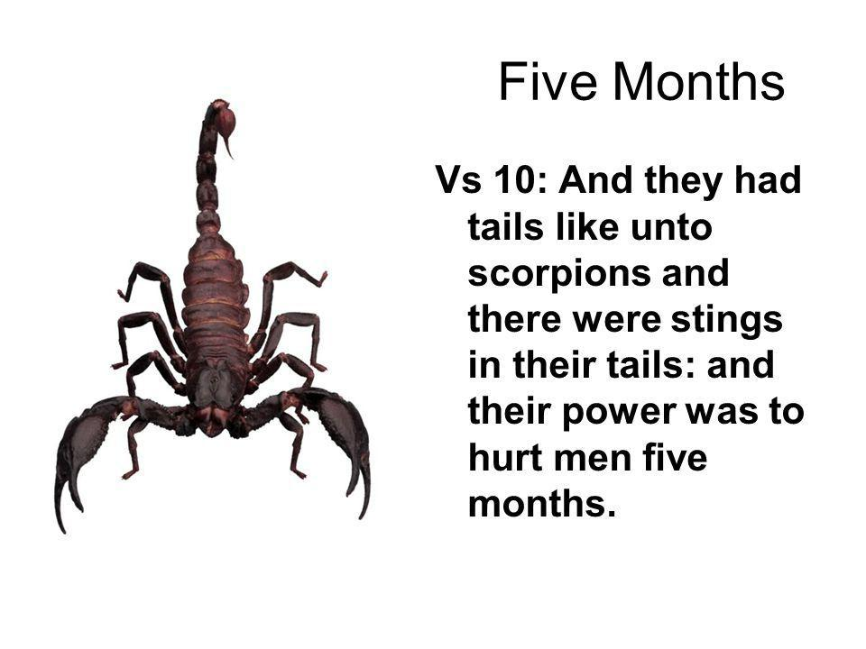Five Months Vs 10: And they had tails like unto scorpions and there were stings in their tails: and their power was to hurt men five months.