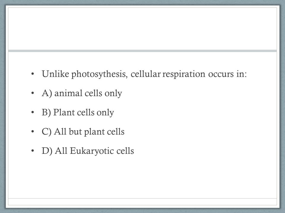 Unlike photosythesis, cellular respiration occurs in: A) animal cells only B) Plant cells only C) All but plant cells D) All Eukaryotic cells