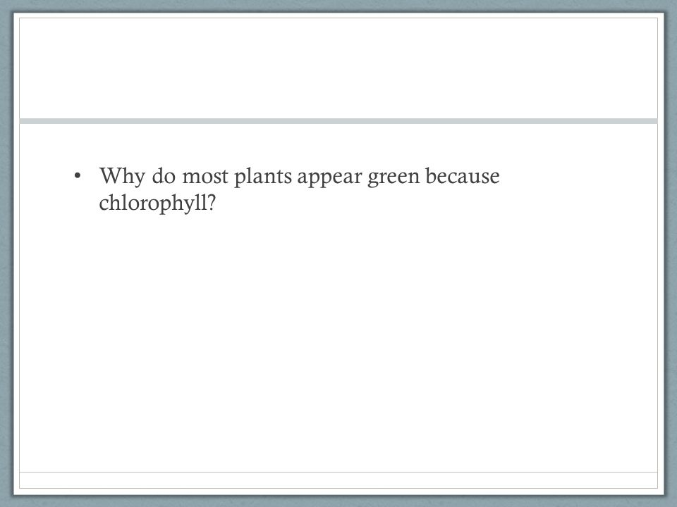 Why do most plants appear green because chlorophyll?